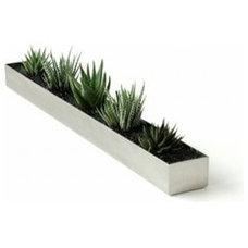 Modern Plants by YLiving.com
