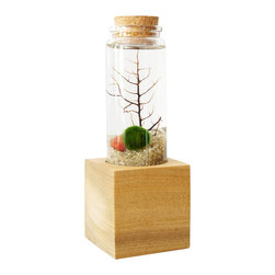 """Moss + Twig - Marimo Moss Ball Pedestal Terrarium - This Marimo moss ball ecosystem contains sand, sea fern and stones. Total size of terrarium with base is 2.5"""" wide x 2.5"""" deep x 6.75"""" tall. Shipped in an easy to assemble kit, just add tap water."""