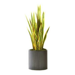 Dalmarko Designs - Snake Grasses in Metal Planter - This piece will complement any space it is put in very nicely.