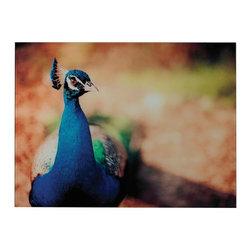 Joshua Marshal - Peacock-Peacock Photograph Printed On Glass - Peacock-Peacock Photograph Printed On Glass