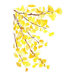 Watercolor Archival Art Print, Autumn Yellow Gingko Leaves by Yao Cheng Design - I used to think only the red trees were beautiful in the fall, but lately I'm realizing the golden yellow glowing leaves might be the best. This print is a perfect reminder.
