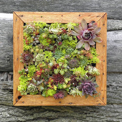 Succulent Vertical Living Wall Art Kit by So Succulent
