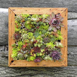 Succulent Vertical Living Wall Art Kit by So Succulent - This is the coolest thing ever! I love that this art is alive. Nothing brings life and freshness to a space like a plant, and this is just an awesome way to display it.