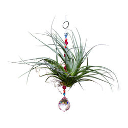 Spirit Pieces - Air Plant Ornament with Pink Crystal Suncatcher and Blue Swarovski Butterfly - This wonderful gift to your yourself or others is a living breathing Tillandsia Air Plant.  The blue crystal sphere sun catcher will sparkle in any window or off of an awning.  Comes with a blue Swarovski Butterfly Top-piece.