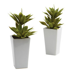 Nearly Natural - Nearly Natural Double Mini Agave with Planter (Set of 2) - The Agave is one of nature's more interesting specimens, as it's equal parts lush, delicate, and full-bodied. The pointed leaves seem to rise out from each other, making an almost perfect cup. This set of faux Agaves captures that look perfectly, and sets them in a pair of beautiful white planters. Makes a great addition to any home or office decor.
