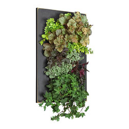 Grovert Wall Planter - Black - Create your own living wall garden with one of GroVert's stunning wooden frames! Each GroVert kit is assembled in six simple steps. Just fill the planting cells with your favorite plants, hang, and add the handsome frame!