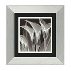 """Four Callas #3"" Framed Print by Steven N. Meyers"