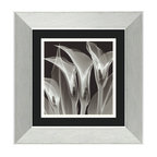 "Amanti Art - ""Four Callas #3"" Framed Print by Steven N. Meyers - You may be witnessing the flowering of a new art. The stunning transparency of these lilies is due to the use of a special x-ray technology. This striking print is framed to maximize the drama, with brushed steel and textured mats in black and white."