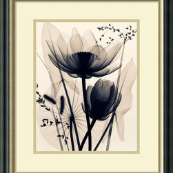 Amanti Art - Judith McMillan 'Lotus and Grasses' Framed Art Print 19 x 22-inch - This exquisite X-ray photography print by Judith McMillan offers a rare glimpse into the delicate structures and patterns of lotus flowers and grasses. Difficult to classify, this image is at once Asian-inspired, Contemporary and Abstract -- an excellent choice for a wide range of decor styles.