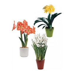 Three-Month Flowering Plant Series - Real bulbs in any room lift your spirits. This is a three-month series using beautiful flowering bulbs.