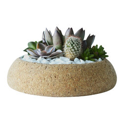 Melanie Abrantes Designs - Large Cork Planter - Hand-turned cork planters designed for desert plants such as succulents and cacti. Cork is naturally porous making it an ideal material for plants. Each planter has a shellacked interior and finished on the outside with a natural beeswax. Due to the nature of the material each planter and unique and one-of-a-kind. Color and size might vary.
