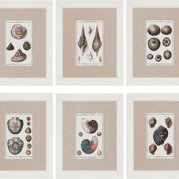Paragon Decor - Sea Shells Set of 6 Artwork - Sea shell prints are matted in fabric.