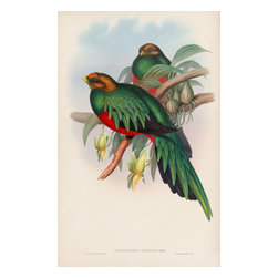 """Pharomacrus Auriceps Print - John Gould, regarded by many as the greatest bird artist and publisher in Britain, produced fifteen folio sets during his career. The book on view is dedicated to a tropical bird called the """"trogon."""" In his preface to the book, Gould wrote: """"If not strictly elegant in form, the Trogons in the brilliancy of their plumage are surpassed only by the Trochilidae [toucans]: their splendour amply compensates for every other defect."""" The illustrations for this work are some of the most magnificent that the ornithologist produced."""