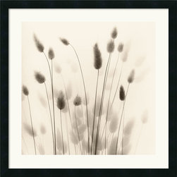 Amanti Art - Italian Tall Grass No. 1 Framed Print by Alan Blaustein - Alan Blaustein's still life photography evokes a contemplative mood and a sense of tranquility and timelessness.