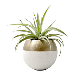 Air Plant Pod // Mini Gold Colorblock Air Plant Pot (with Air Plant) - These mini air plant pods are natural pods that have been hand painted and re-purposed into a planter so each pod is unique and organic in size/shape. These natural vessels make great displays for air plants. The plant pods would look great displayed along a shelf, desk, or window sill.
