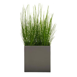 Modern Planter - Modern Cube Planter - Pewter, Medium - A slightly more low profile way to manage your growth rate. This unique planter is created with a smooth lip around the edge to give easy access and so you can remove overgrown plants without damaging the plant or root ball.