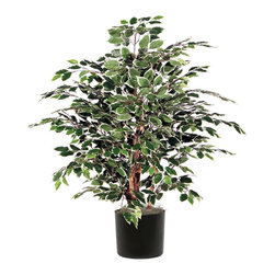 Vickerman - 4' Variegated Extra Full - 4' Extra Full Variegated Ficus Bush in Black Plastic Pot