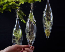 Aerium Ornament - Specimens of tillandsia, mosses and lichens encapsulated in glass ornaments live in miniature existence on the Christmas tree or even suspended near an open window. The delicacy of these aeriums carefully brings a studied piece of the landscape indoors to enjoy.