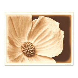 Studio D&K - Neutral Wall Art on Canvas • Sepia Photography • Large Wall Art , 20x30 - Large Gallery Wrapped Canvas Featuring Wild Dogwood in Bloom