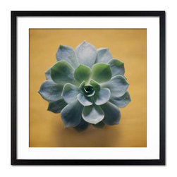 Photos.com by Getty Images - Green Succulent On Yellow Surface - Color photograph of a fresh, green succulent with tiny water-droplets on a yellow surface. In matte black frame.