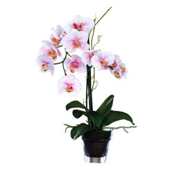 Jane Seymour Botanicals - Phalaenopsis Orchid in Glass Pot - Even better than the real thing. Why toil day after day to achieve a few weeks of delicate orchid bloom, when you can have year-round bloom with this permanent potted Phalaenopsis orchid? One look at this lovely lavender orchid, and you'll immediately stop caring about the color of your thumb.