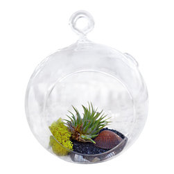 Air Plant Company - Table Orb with Airplant Blk Rocks - One of Our Pride and Joy .100%