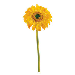 Silk Plants Direct - Silk Plants Direct Gerbera Daisy (Pack of 24) - Yellow - Pack of 24. Silk Plants Direct specializes in manufacturing, design and supply of the most life-like, premium quality artificial plants, trees, flowers, arrangements, topiaries and containers for home, office and commercial use. Our Gerbera Daisy includes the following: