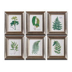 Grace Feyock - Grace Feyock Ferns I, II, III, IV, V, VI Wall Art / Wall Decor X-29533 - Prints are accented by frames with a champagne silver leaf base, brown and black wash and gray glaze. Prints are under glass.