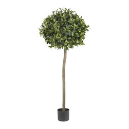 5' Sweet Bay Ball Topiary Silk Tree - Sometimes, your decor calls for a bold look, but not something that overwhelms. For that need, may we suggest this beautiful 5' Sweet Bay Topiary? The long, stately trunk gracefully climbs upward, and culminates in a burst of soft, lush greenery that is sure to catch anyone's eye. And best of all, this faux tree will stay fresh and green for years, with nary a need for water. Height= 5 ft x Width= 24 in x Depth= 24 in