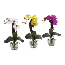 Nearly Natural - Mini Phal Orchid Arrangement (Set of 3) - Three pretty Orchids, all in a row, that's what you'll be humming when you display this three pack of beautiful Mini Phal Orchids. We've taken one of nature's greatest treasures and tripled it for you. With soft blooms, leafy greens, and a vase complete with faux water, these will make a perfect accompaniment to any desk, counter, table, or anywhere a little natural beauty is needed. Makes a great gift as well.