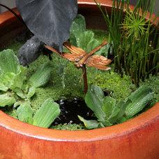 Contemporary  by Bliss Garden Design