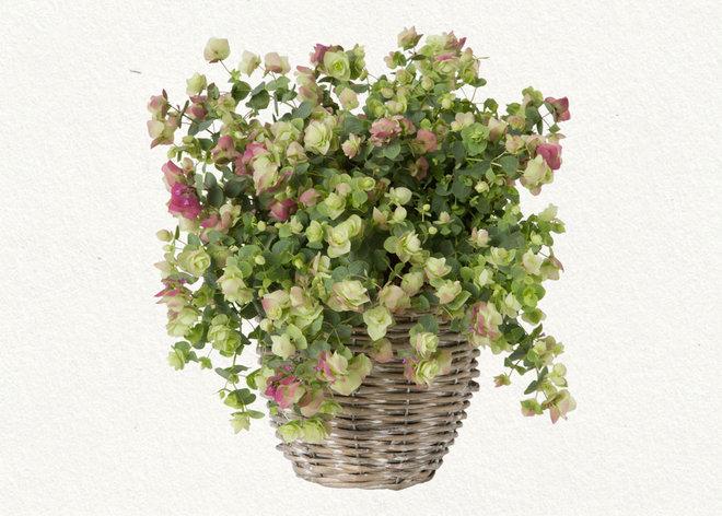 Traditional Plants Flowering Oregano
