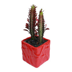 "MODgreen - Euphorbia t. - 4"" Ceramic Potted Cactus and Succulents - This cactus is native to the tropical and subtropical regions in the world and it is known as 'Good Luck Plant'. Water once a month and place under bright light. With this design MODgreen has put a new twist to the standard ceramic cube planter by giving them a corrugated texture that make these beautiful pots stand out above the rest."