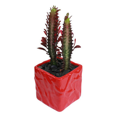 """MODgreen - Euphorbia t. - 4"""" Ceramic Potted Cactus and Succulents - This cactus is native to the tropical and subtropical regions in the world and it is known as 'Good Luck Plant'. Water once a month and place under bright light. With this design MODgreen has put a new twist to the standard ceramic cube planter by giving them a corrugated texture that make these beautiful pots stand out above the rest."""