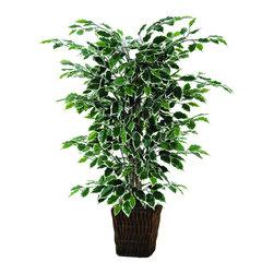 Vickerman - 4' Variegated Ficus Bush in Square Willow Container - 4' Variegated Ficus Bush in Square Willow Container