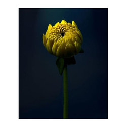 "Michael Filonow ""Macro 2"" Floating Photo Print - This sunny yellow flower about to bloom evokes a world of possibilities about to open up!  1/4 inch museum grade archival acrylic was used to face mount this beautiful floating frame.  All materials used are 100% archival museum grade."