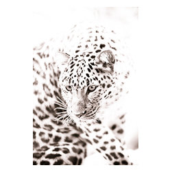 Amur Leopard Fine Art Photograph, 20x30, Giclee' - Amur leopard crouching in front of a bright white sky. Fine art wildlife photograph in monochrome with a touch of sepia. Size of paper is 20x30 with a 1 inch white border for ease of framing.