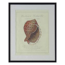 Consigned Vintage Sea Shell Painting, Version 1 - Vintage print of natural nautilus seashell.