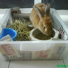 Bunny Litter Box Ideas | Furrybutts