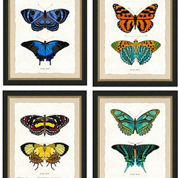 """Ballard Designs - Set of any 2 Deux Papillons Antique Print - Made in the USA. Glass front. """"Butterfly Papillon"""" label at bottom. These brightly colored butterflies were recreated from found vintage illustrations. Set against a white background, the colors of these delicate winged creatures really pop. Print is finished with a faux, deckle-edge cream linen mat and surrounded by a black wood frame. Deux Papillons Antique Print:. . ."""