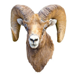 Walls Need Love - Ram Mount Decal - Go head to head with the bighorn. This dominant wall decoration showcases the ram's determined eyes and signature curved horns.