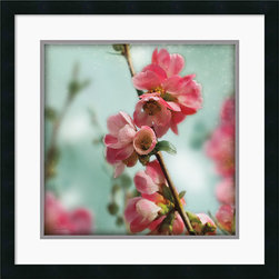 Amanti Art - Quince Blossoms III Framed Print by Sue Schlabach - Brighten up your decor with these perfectly pink Quince Blossoms by photographer Sue Schlabach.