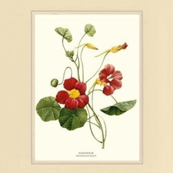 Nasturtium Flower Botanical Print - 5x7 Print in 8x10 Cream/Cream Mat - Vintage style botanical flower art print from turn of the 19th century illustrations.