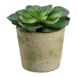 Silk Plants Direct - Silk Plants Direct Echeveria (Pack of 2) - Pack of 2. Silk Plants Direct specializes in manufacturing, design and supply of the most life-like, premium quality artificial plants, trees, flowers, arrangements, topiaries and containers for home, office and commercial use. Our Echeveria includes the following: