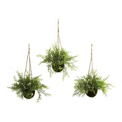 Nearly Natural - Ruscus, Sedum & Springeri Hanging Basket (Set of 3) - At home in a kitchen, dining area, or an office reception area, these wonderful Ruscus, Sedum & Springeri Hanging Baskets will certainly liven up any decor. With a light, almost fluffy look, the green sprigs and leaves reach out, as if to beg a passerby to touch them. best of all, these hanging baskets will stay fresh looking for years with nary a drop of water. Buy one set for yourself, and another for a friend.