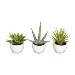Southwest Collection (Set of 3) - Enjoy the simple beauty of the incredible Agave plant with our three-piece Southwest Agave Collection. Each piece is a sample of the different varieties of Agave. Enjoy a 5.5 inch high thick green leaved Agave, the sparsely leaved 8.5 high version, or the multi leaved 7 inch high spiky piece. Put them together or around the house for a Southwestern or Central American feel. Height= 8.5 in - 5.5 x Width= 5 in - 5.5 in x Depth= 3.5 in - 5.5 in