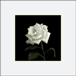 Amanti Art - Rose, Flower Series VIII Framed Print by Walter Gritsik - Photographer Walter Gritsik uses photography to explore flowers in all their structural elegance and complexity.