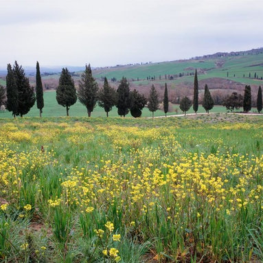 Murals Your Way - Tuscan Countryside Outside Pienza, Italy Wall Art - Photographed by Dietrich Leis Stock Photography, the Tuscan Countryside Outside Pienza, Italy wall mural from Murals Your Way will add a