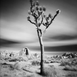 "Joshua Tree National Park - Large-Scale, Limited Edition Photography - This desert scene was captured mid-morning at Joshua Tree National Park. This 20"" x 28"" photograph has a dramatic composition and the long exposure captures the dreamy nature of the low moving clouds."