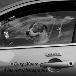 Dog Days of Summer - © Luke Moore.